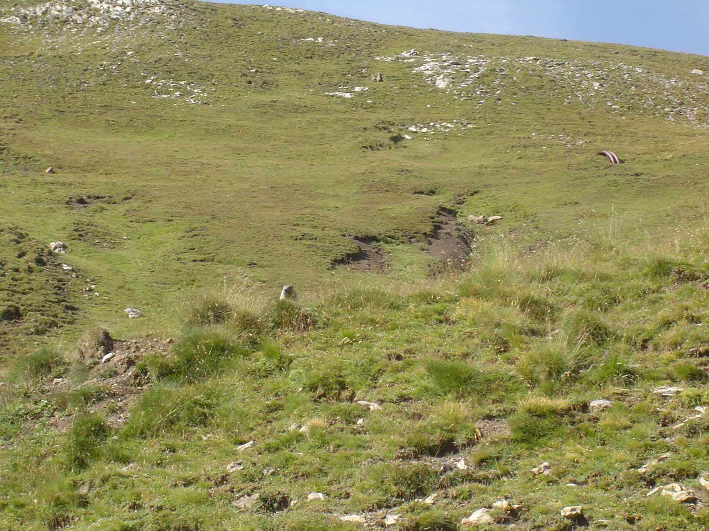 marmottes d'Auron