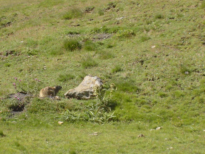 Auron et ses marmottes